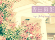 麦田摄影工作室  Ting's Photography Studio